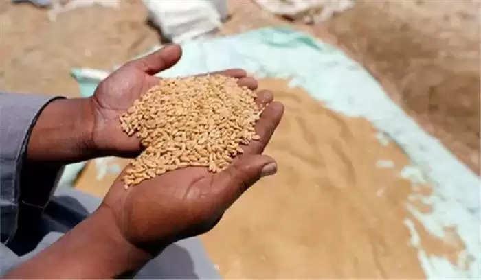 Wheat Procurement : केंद्र सरकार ने किसानों के खाते में सीधे भेजे 49,965 करोड़ रुपये