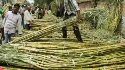 Yogi सरकार ने गन्ना किसानों को किया रिकॉर्ड भुगतान