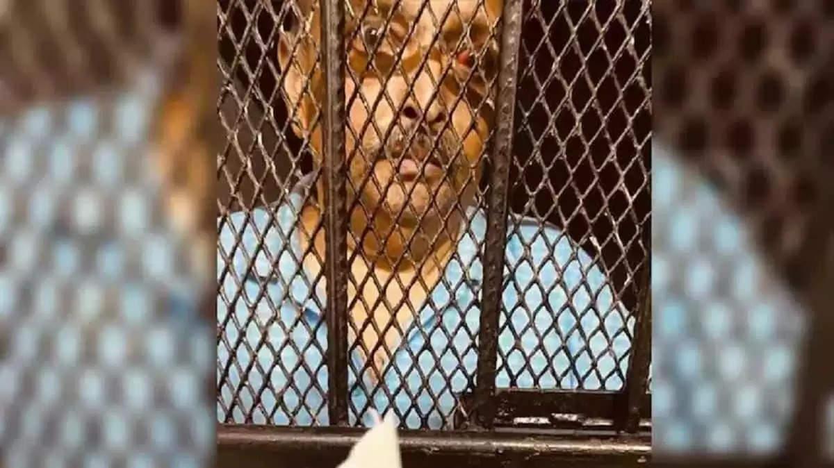 Mehul Chowksey: डॉमिनिका के उच्च न्यायालय ने चौकसी को जमानत देने से किया इंकार