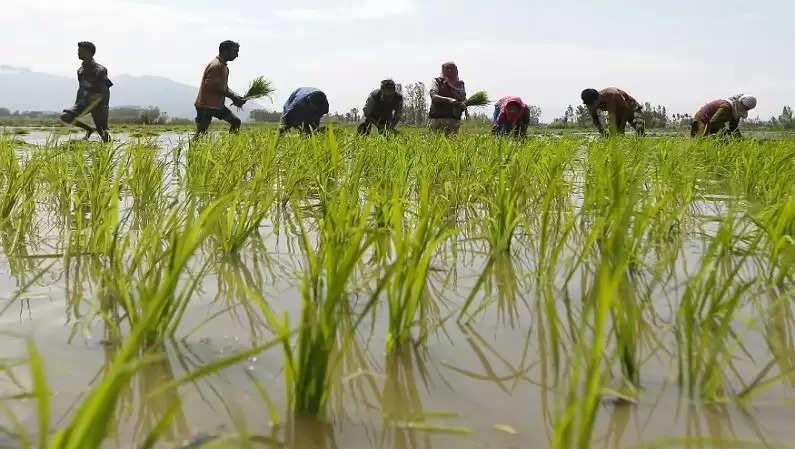 50 से लेकर 200 रुपए प्रति क्विंटल के बीच होंगे खरीद के स्लैब शिवराज सरकार ने आखिर मान ली धान मिल संचालकों की मांग