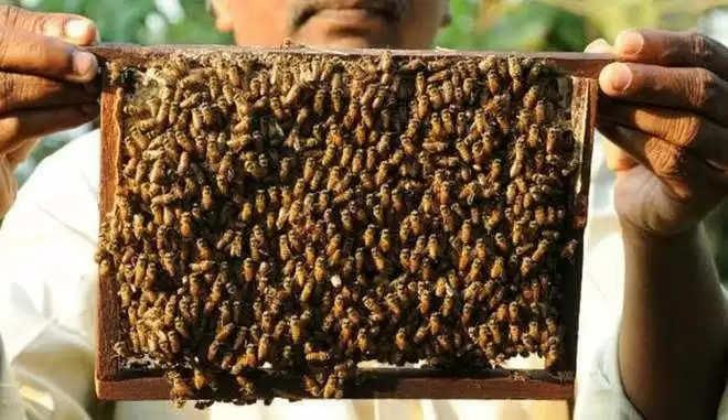 Dharmshala मधुमक्खी अनुसंधान केंद्र बनेगा मधुमक्खी विरासत फार्म
