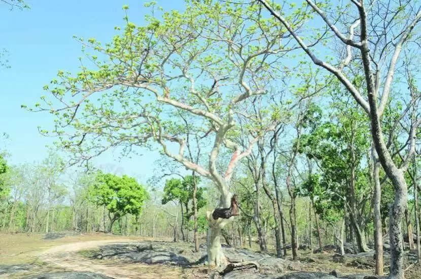 Nashik देवराई, वनराई परियोजनाओं के लिए वित्त की जरूरत