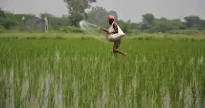 P&K fertilizers के लिए बढ़ी हुई कीमतों को पूरे वर्ष के लिए लागू करने की मंजूरी