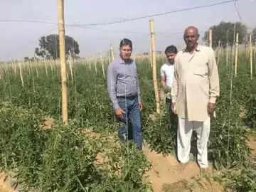 Gurgaon आधुनिक खेती से किसानों का फायदा:वर्टिकल पद्धति से उगाए सब्जियां