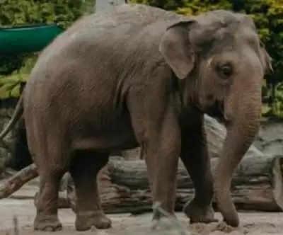 लखीमपुर खीरी के जंगलों में सेल्फी लेते वक्त छात्र को हाथी ने रौंदा